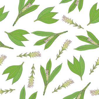 Ботанический бесшовный узор с зелеными листьями куркумы и соцветий