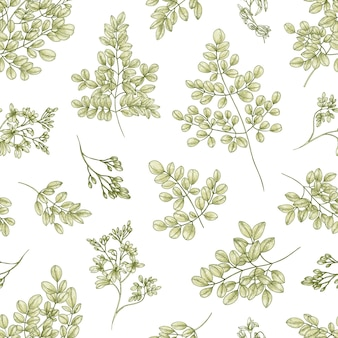 Botanical seamless pattern with miracle tree or moringa oleifera leaves and flowers on white surface