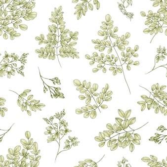 흰색 표면에 미라클 트리 또는 모링가 올레이페라 잎과 꽃이 있는 매끄러운 식물 패턴