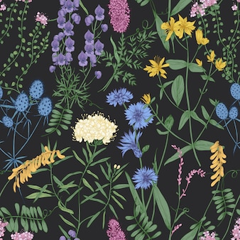 Botanical seamless pattern with romantic wild blooming flowers, meadow flowering herbs and herbaceous plants on black background.