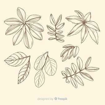 Botanical sketches collection