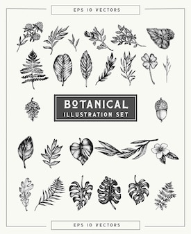 Ботанические старинные растения и цветы установлены. красивые иллюстрации рисованной в пунктирном стиле. отдельные элементы для графического дизайна, прозрачные картинки для вашего творчества.