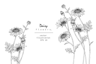 Botany drawings.