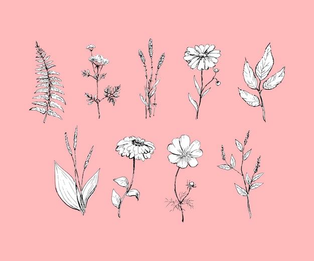 植物学。セットする。ヴィンテージの花。彫刻スタイル