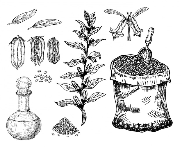 Bottle of sesame oil with plant and seed. sack of sesame seeds.  hand drawn illustration.  on white background.