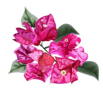ブーゲンビリア花のベクトルのイラスト