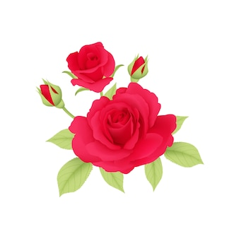 Bouqet red roses vector