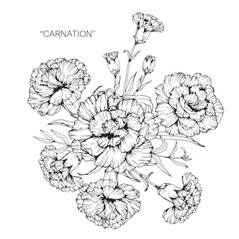 Bouquet of carnation flower drawing illustration.