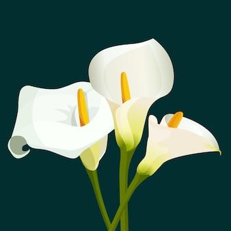 진한 녹색 배경에 흰색 칼라 백합 꽃다발. 목적을 위해 봄 꽃의 꽃 그림입니다. 완전히 편집 가능. 천연 식물 zantedeschia aethiopica 식물의 꽃