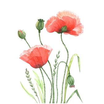 녹색 싹이 벡터 수채화와 야생 꽃 붉은 양귀비의 꽃다발