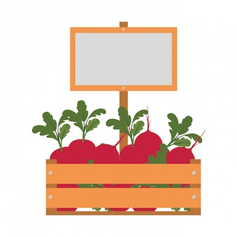 Box with beet isolated icon
