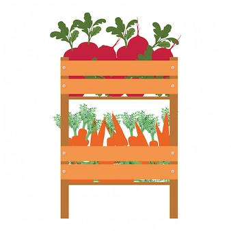 Box with vegetables isolated icon