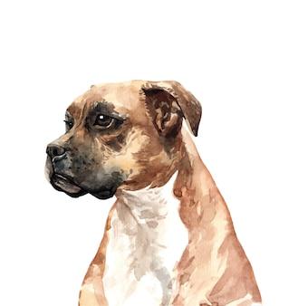 ボクサー犬水彩手描き