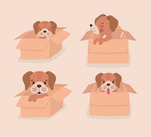 Коробки со щенками