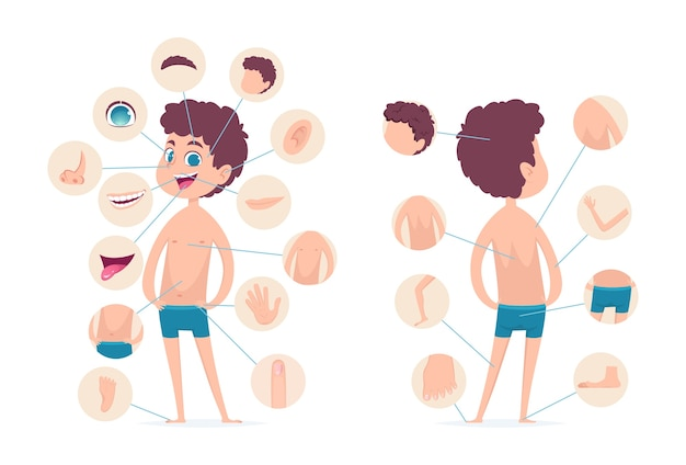 소년 신체 부위. 젊은 인간 학교 남성 아이 해부학 손 다리 손가락 머리 벡터 만화 캐릭터. 인체 남성의 몸, 손가락 및 머리, 발가락 및 무릎 그림