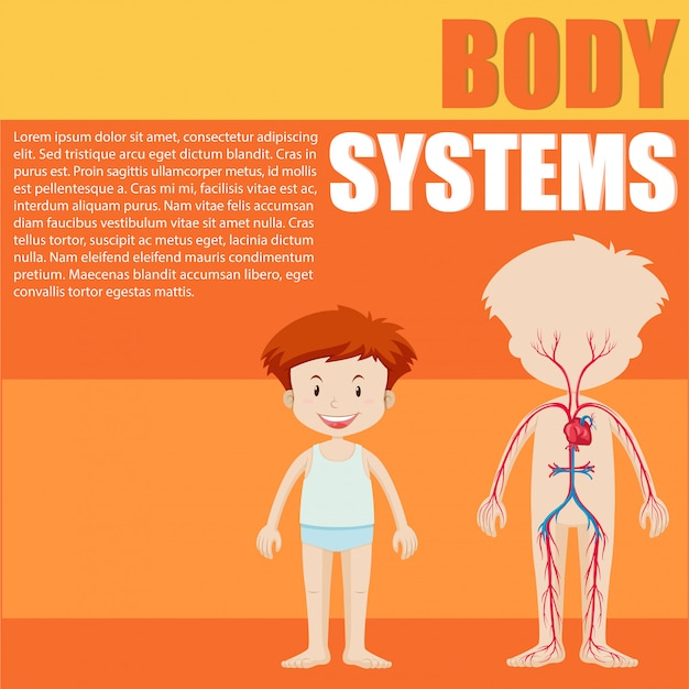 Boy and body system diagram
