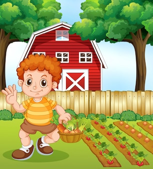 A boy harvest vegetable