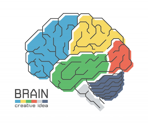 Brain anatomy with flat color design and outline stroke. creative idea concept