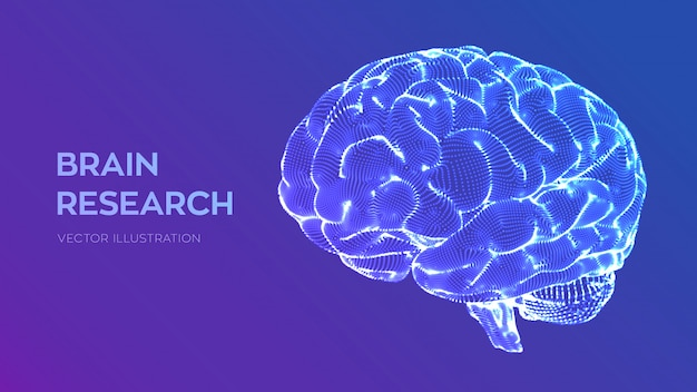 Brain. human brain research