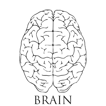 뇌 아이콘 그림