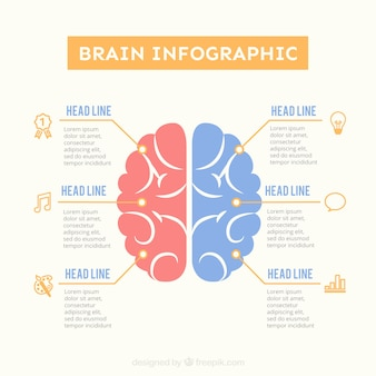 Brain infographic template in pastel colors