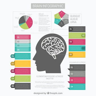 Brain infographic template with graph and different options