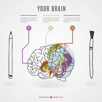 Brain infographic with a pencil and a pen
