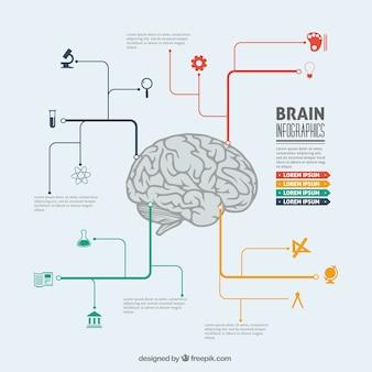 脳のインフォグラフィック