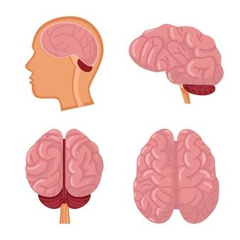 Brain organ of man cartoon icon set.