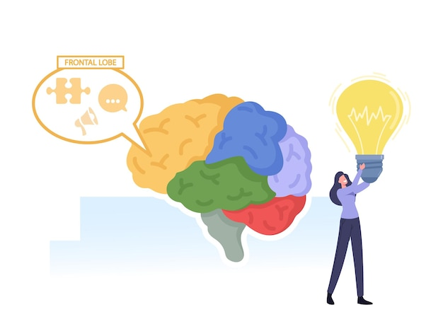 Brain parts anatomy. tiny female character with glowing light bulb in hands at huge human brain separated on colorful parts and working frontal lobe, intellect, creativity. cartoon vector illustration