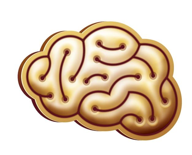 Форма мозга