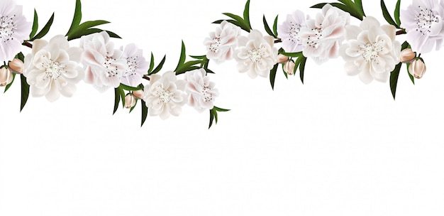Branch of cherry blossom with flowers and leaves on white background.