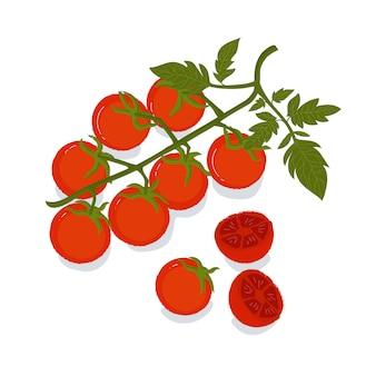 Branch of fresh cherry tomatoes