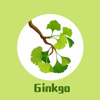 Branch of ginkgo biloba with leaves illustration
