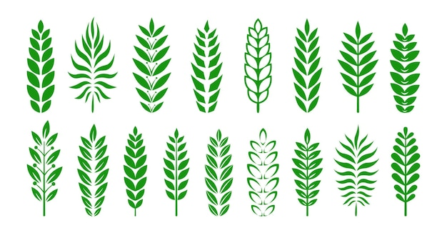 분기 그래픽 상 또는 문장 녹색 세트 올리브 가지 월계수 잎 상