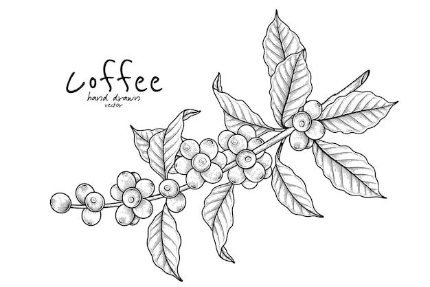 果物とコーヒーの枝手描きイラスト