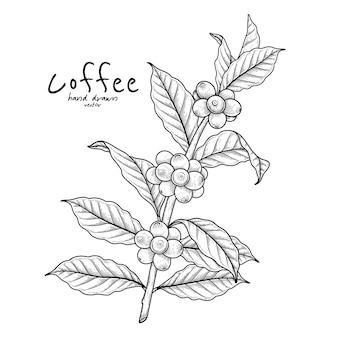 과일과 함께 커피의 지점 손으로 그린 그림