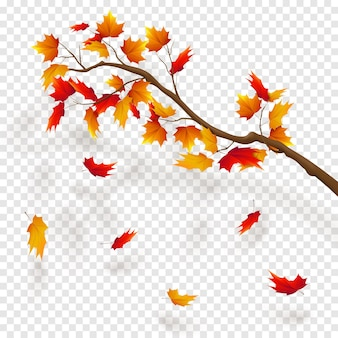 カエデの木の枝、紅葉。透明度の背景に秋の現実的なベクトルイラスト。