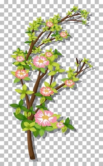透明な背景にピンクの花の枝