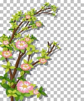 Branch of pink flower on transparent background