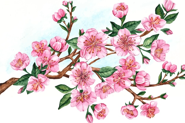 Branch of sakura flowers