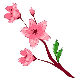 Branch with flowers in blossom, isolated flower of cherry tree. sakura flourishing, hanami season in oriental countries