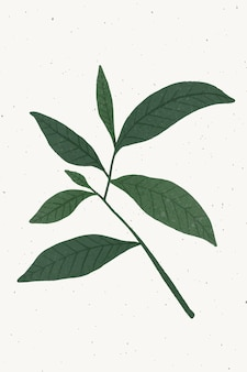 Branch with green leaves design element