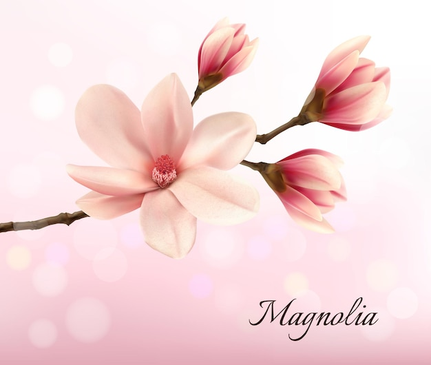 ピンクのモクレンの花が2つある枝。ベクター。