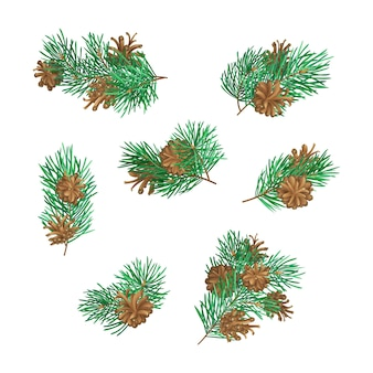Branches of conifers with needles and cones. high detailed pine tree branches  on white background.  plants set. christmas  elements.