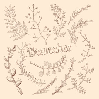 Branches hand drawn illustration