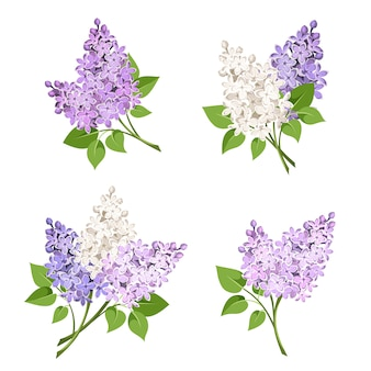 Branches of lilac flowers. illustration.