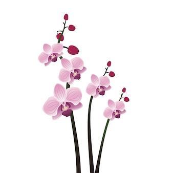 Ветки с цветами фиолетовой орхидеи с бутонами милых весенних цветов и элементами декора ...