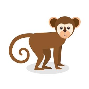 Brazil monkey animal design