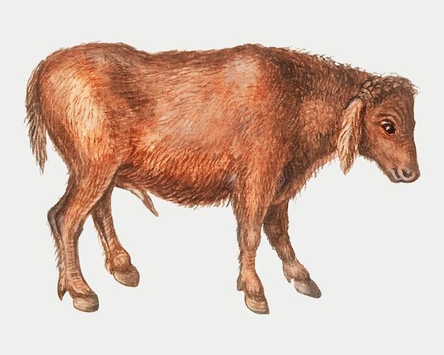 빈티지 스타일의 브라질 소